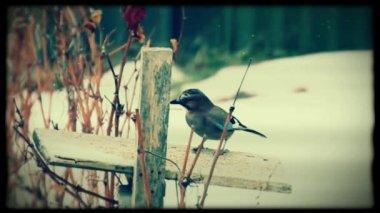 Birds — Stock Video