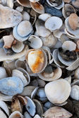 Pile of colorful shells — Stockfoto