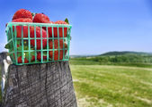Basket of strawberries on fence — Stock Photo