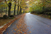 Colorful autumn trees on a winding country road — Stok fotoğraf