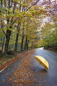 Colorful autumn trees and umbrella on a winding country road — Stock Photo
