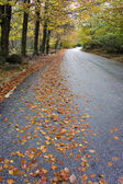 Colorful autumn trees on a winding country road — Stock Photo