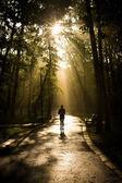 Muž běhání v parku — Stock fotografie