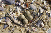 Nest on the Beach in Spring — Stock Photo