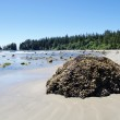 Low tide on the Long Beach. Vancouver Island, Canada — Stock Photo #40172231