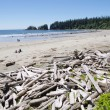 Low tide on Long Beach with driftwoods. Vancouver Island, C — Stock Photo #40172293
