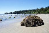 长滩上的低潮。加拿大温哥华岛 — 图库照片