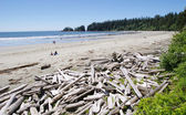 Low tide on the Long Beach with driftwoods. Vancouver Island, C — Stock Photo