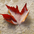 Stock Photo: Frozen autumn leaf on beach