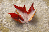 Frozen autumn leaf on the beach  — Stock Photo