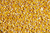 Crumble corns of fodder maize — Stock Photo