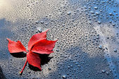 Water drops on polished black car paint with red leafs — Stock Photo