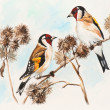 Goldfinches in the winter — Stock Photo