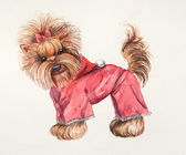 Yorkshire terrier in a pink suit — Photo