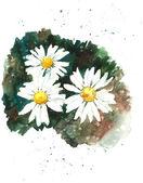Witte chamomiles achtergrond, aquarel samenstelling. — Stockfoto