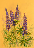 Lupine background, oil pastels composition — ストック写真