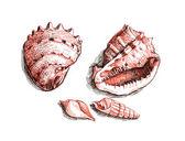Shells on a beach — Stock Photo
