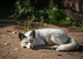 White fox — Stock Photo