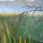 Web on grass. — Stock Photo