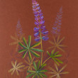 Lupine background, color pencils composition. — Stock Photo