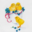 New born, three yellow chickens with little blue flowers. — Stock Photo #44690553