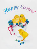 Happy Easter Design. New born, three yellow chickens with little blue flowers. — Stock Photo