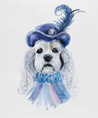 Dog in a hat with a feather. — Stock Photo