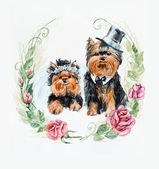 Two dog. Yorkshire terrier. Dogs wedding. Roses circle frame. — Stock Photo