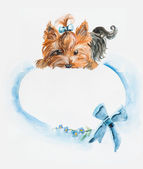 Dog with a hood. Yorkshire terrier. Blue bow and hair dress. — Stock Photo