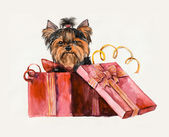 Puppy as a gift. Yorkshire terrier looks out of a box. — Foto de Stock
