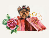 Puppy as a gift. Yorkshire terrier looks out of a box. — Stock Photo