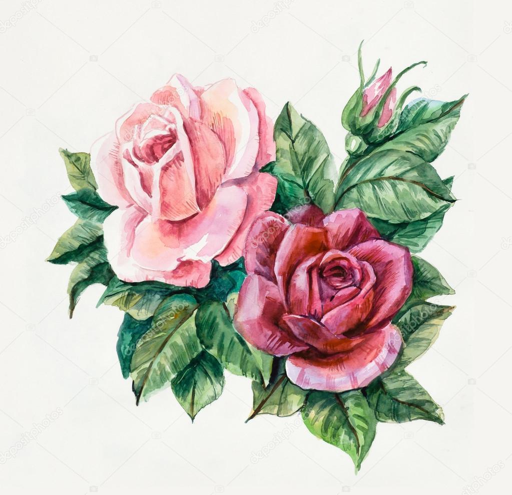 Duas rosas rosa padr o da rose fotografias de stock budogosh 48994673 - Dessin de rosier ...