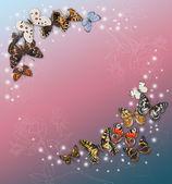 Russian butterflies. — Stock Photo