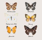 Russo buterflies. — Fotografia Stock