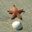 Starfish and shell in sand — Stock Photo