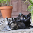 Mother cat and her kittens — Stock Photo