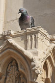 Pigeon resting on a detail Gothic Cathedral — Stockfoto