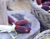 Small red corn cobs — Stock Photo