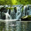 Stock Photo: Waterfall in green Galiciforest