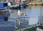 Seagull on fishing boat — Stockfoto