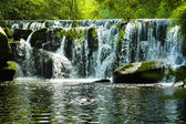 Waterfall in green Galician forest — Stock Photo