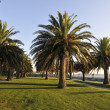 Stock Photo: Palm trees in park