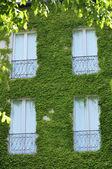 Canopy of vines — Stock Photo