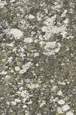 Stone granite with lichens and old surface — Stock Photo