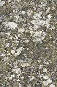 Pietra di granito con superficie vecchi e licheni — Foto Stock