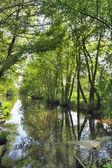 郁郁葱葱的绿色景观 — 图库照片