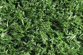 Syntethic football soccer green turf — Stock Photo