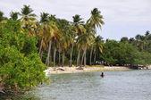 Tropical beach in Caribbean sea — Stock Photo