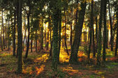 Forest sunlights — Stock Photo