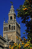The Giralda belltower and Seville Cathedral — Stock Photo